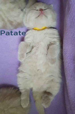patate-16032019