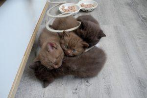 chatons-idea-700x465
